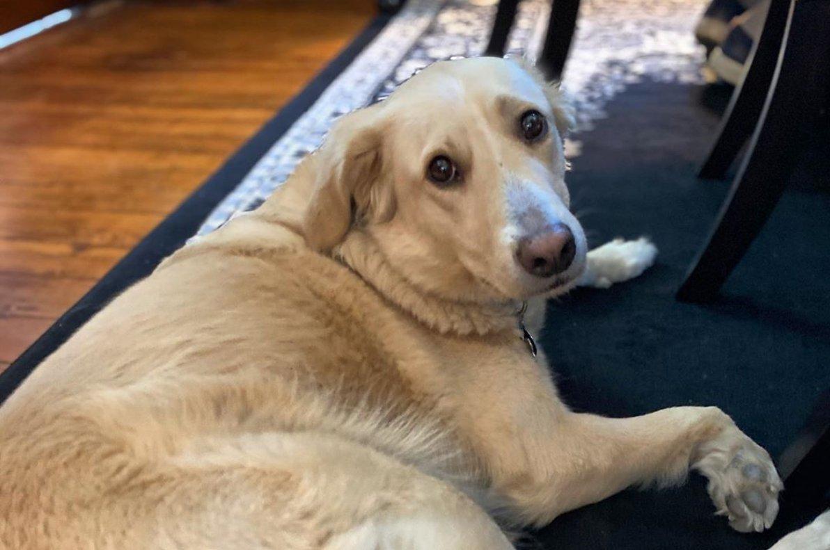 George Washington Wood Bed & Breakfast dog guest